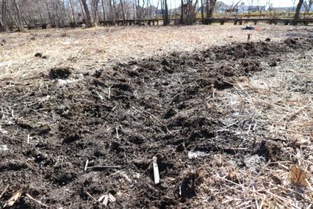湿地回復の溝作り
