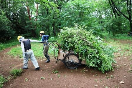 樹木伐採運搬
