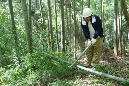 竹の枝払い