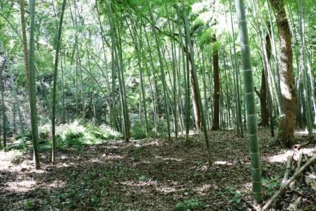 手入れ後の竹林