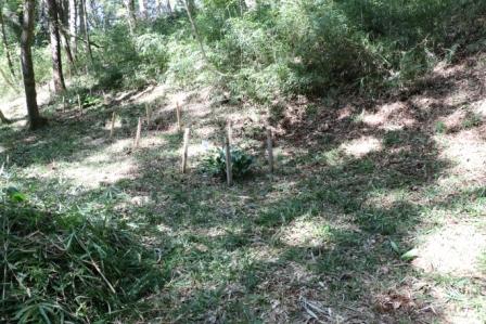 下草刈後の林床