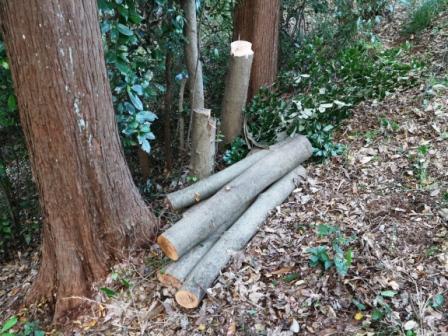 間伐材集積