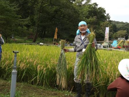 稲刈り 稲の束ね方