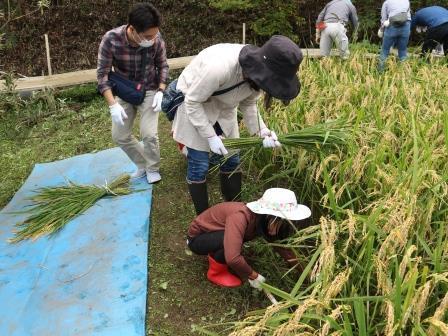 稲刈り 田んぼ ボランティア 東京