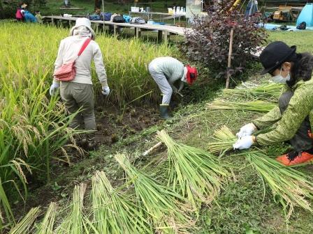 稲刈り 東京 ボランティア