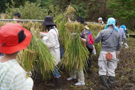 田んぼの活動 はざかけ 東京 ボランティア
