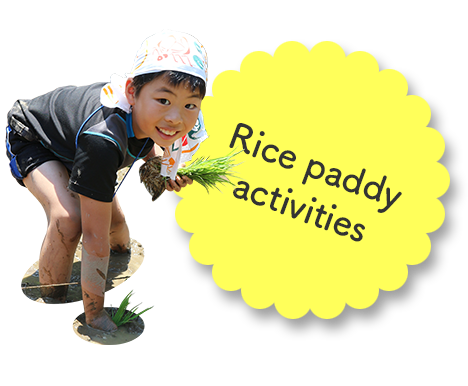Rice paddy activities